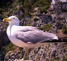 Profile of a Seagull by daphsam
