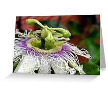 Passionfruit flower Greeting Card