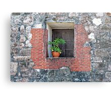 Plant on a Windowsill Metal Print