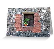 Plant on a Windowsill Greeting Card