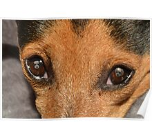 I see dogs Poster