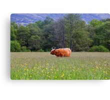 Spring In The Highlands Canvas Print