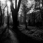 Prague Olsany Cemetery by dozzie