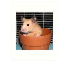 Potted Hamster Art Print