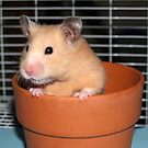 Potted Hamster by tulsa7035