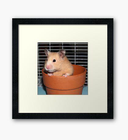 Potted Hamster Framed Print