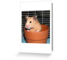 Potted Hamster Greeting Card