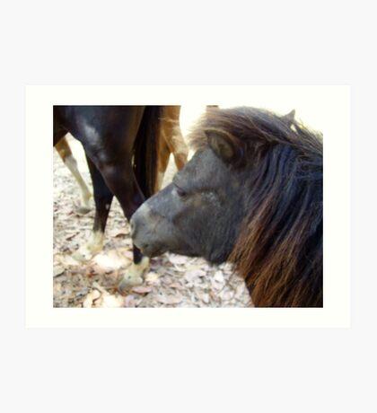 A Miniture Horse Art Print