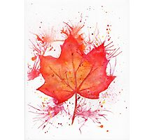 Fall Leaf Photographic Print
