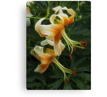 Heavenly Lilies Canvas Print