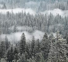 Mist among the trees by Gary Lange