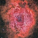 The Rosette Nebula by Cole Pickup
