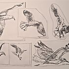 Seagulls, preliminary pen sketches 2012Ⓒ framed 50x38cm FOR SALE at lizmooregolding@gmail.com by Elizabeth Moore Golding