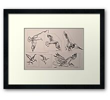 Seagulls, preliminary pen sketches 2012Ⓒ framed 50x38cm FOR SALE at lizmooregolding@gmail.com Framed Print