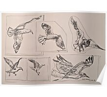Seagulls, preliminary pen sketches 2012Ⓒ framed 50x38cm FOR SALE at lizmooregolding@gmail.com Poster