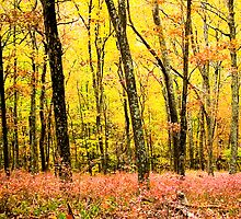 Fall Forest by Diana Beato
