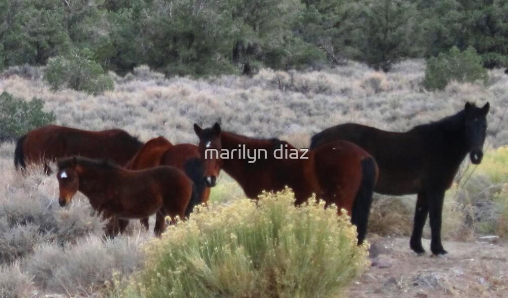 Mustang Magic by marilyn diaz