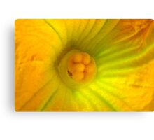 Globe Zucchini Flower Canvas Print