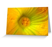 Globe Zucchini Flower Greeting Card