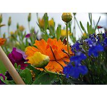 Floral Sherbert  Photographic Print