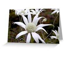 Flannel Flower Greeting Card