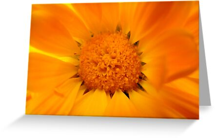 Yellow Daisy by Michelle Ricketts