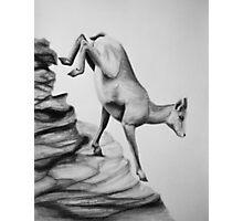 Bighorn Sheep - Charcoal painting Photographic Print