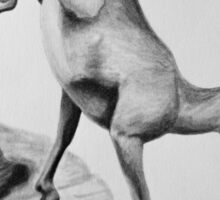 Bighorn Sheep - Charcoal painting Sticker