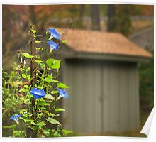 Shed Morning Glory Poster