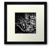 Birch Bark #2 Framed Print
