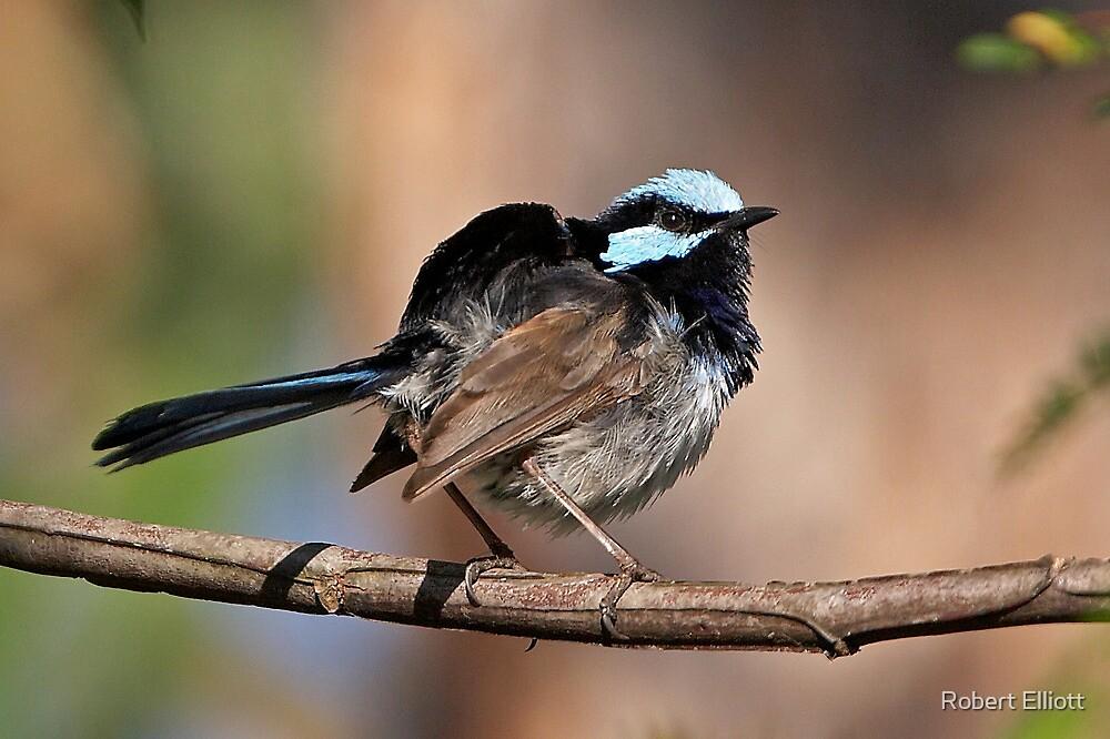 Superb Fairy-wren ~ Ruffle My Feathers by Robert Elliott