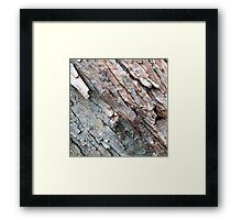 Birch Bark #4 Framed Print