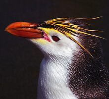 Royal Penguin Portrait by Carole-Anne