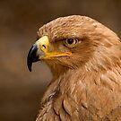 Tawny Eagle by Stuart Robertson Reynolds