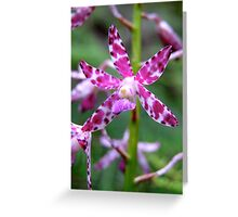 Splotched Hyacinth Orchid Greeting Card