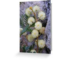 Wattle flower Greeting Card