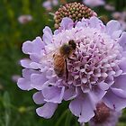 What a Buzz by Thomayne