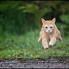 Supercat by Anne Young