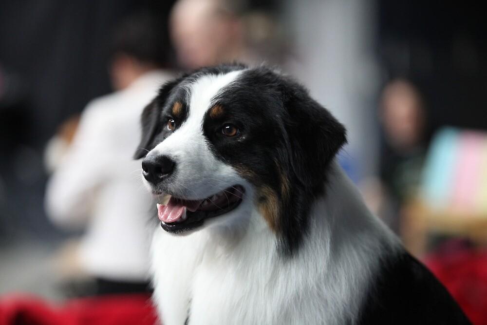 portrait of  St. Bernard dog by mrivserg