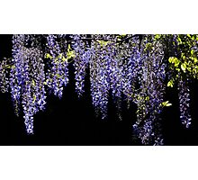 Wisteria Worth Waiting For Photographic Print