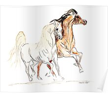 Arabian Horses - Bay and Grey Poster