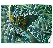 coral abstract landscape Poster