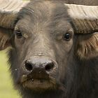 Water Buffalo by AngelaHumphries