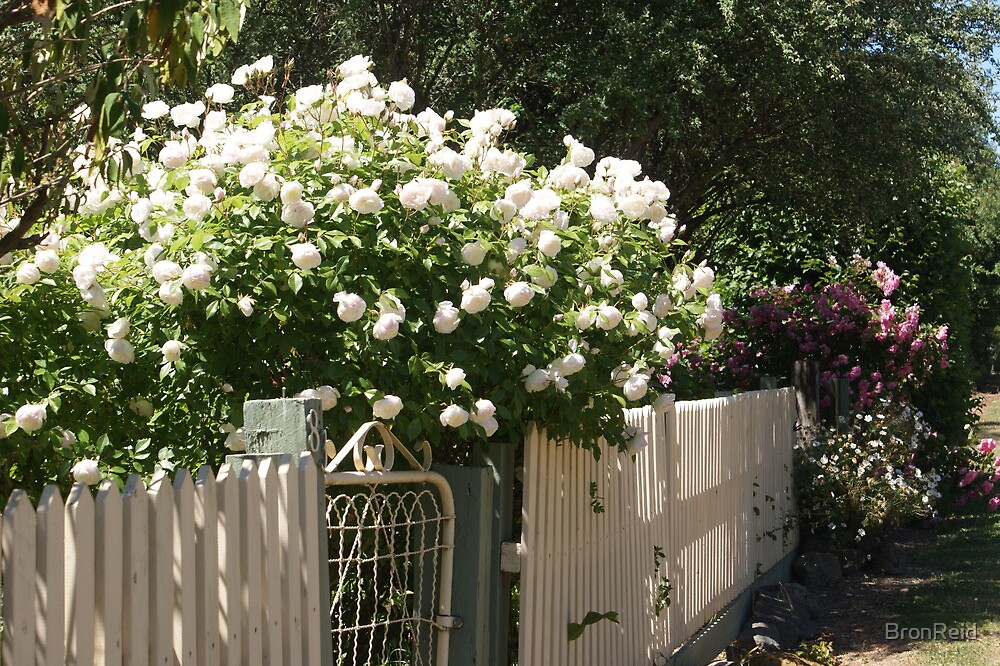 Cottage fence by BronReid