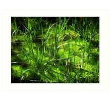 Green Grass in Swampy Forest  Art Print
