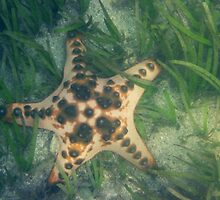 Starfish in sea grass off Sanur by Michael Brewer