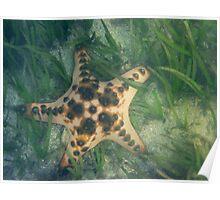 Starfish in sea grass off Sanur Poster