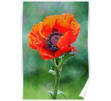 Oriental Poppy Poster
