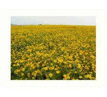 Yellow crop, Shan State, Myanmar Art Print