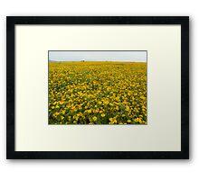 Yellow crop, Shan State, Myanmar Framed Print